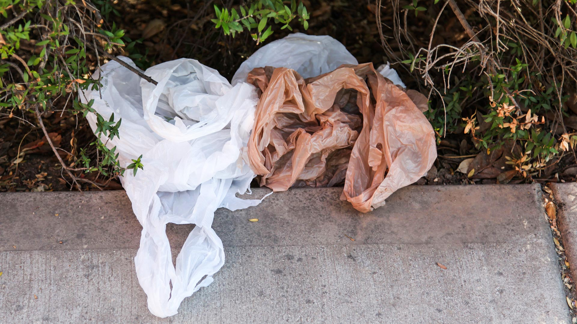 Plastic bags often litter many urban and rural areas around the world.