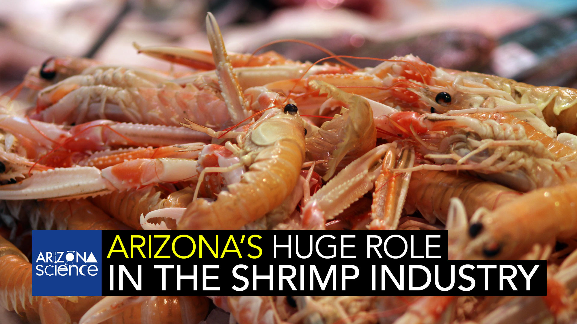 Most people don't think Arizona when they think shrimp. But the research being done in our desert state is a critical part of the worldwide shrimp industry.