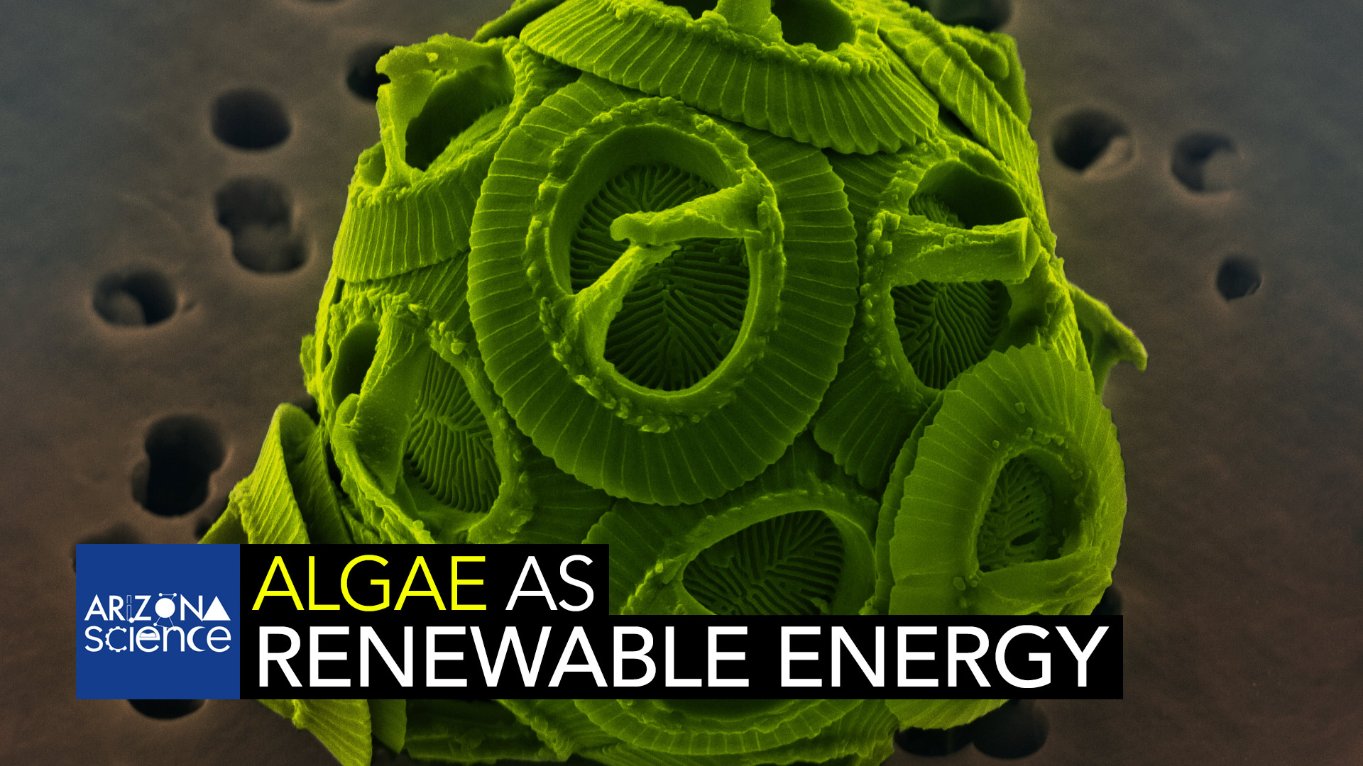 Finding new ways to generate energy with minimal environmental impact. Pictured: algae as viewed in a scanning electron microscope.