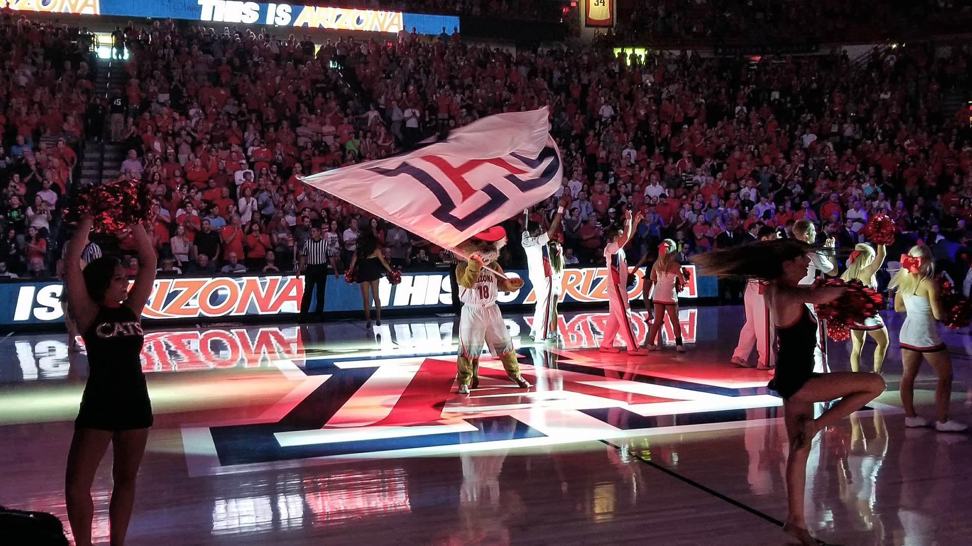 "Wilbur the Wildcat waves a UA ""Block A"" flag before an exhibition match between the University of Arizona men's basketball team and Chico State on Nov 5, 2017."