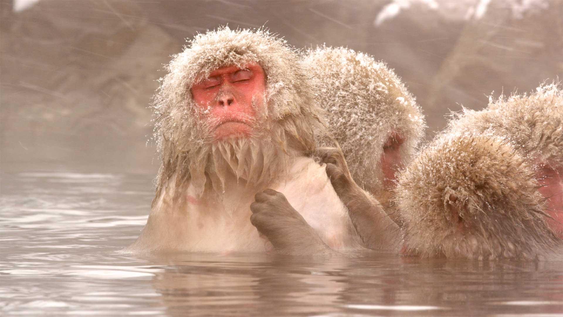 nature_snow-monkeys_hot_springs_hero