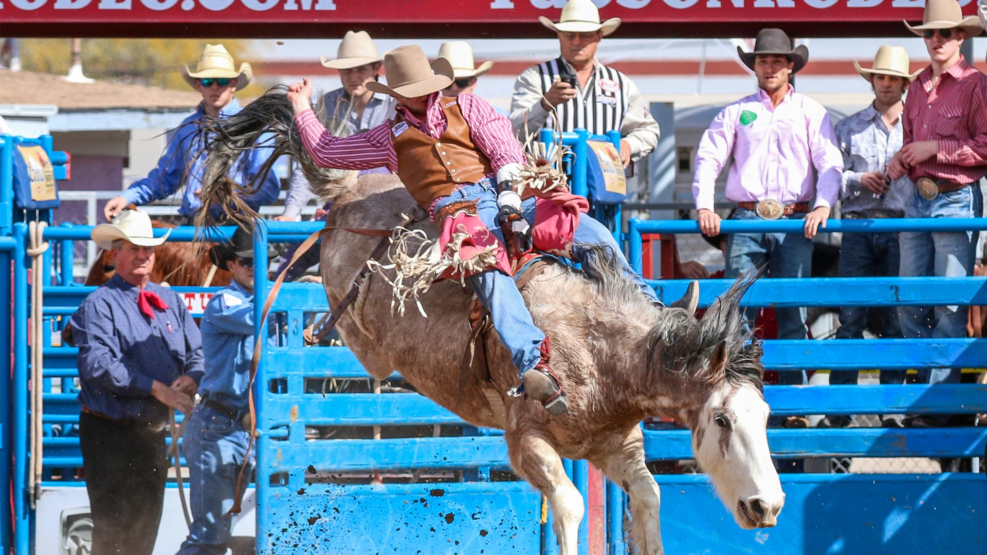 Bareback Rider at the Tucson Rodeo