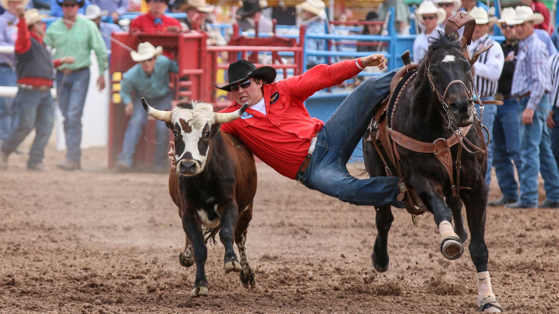 A steer wrestler at the Tucson Rodeo.