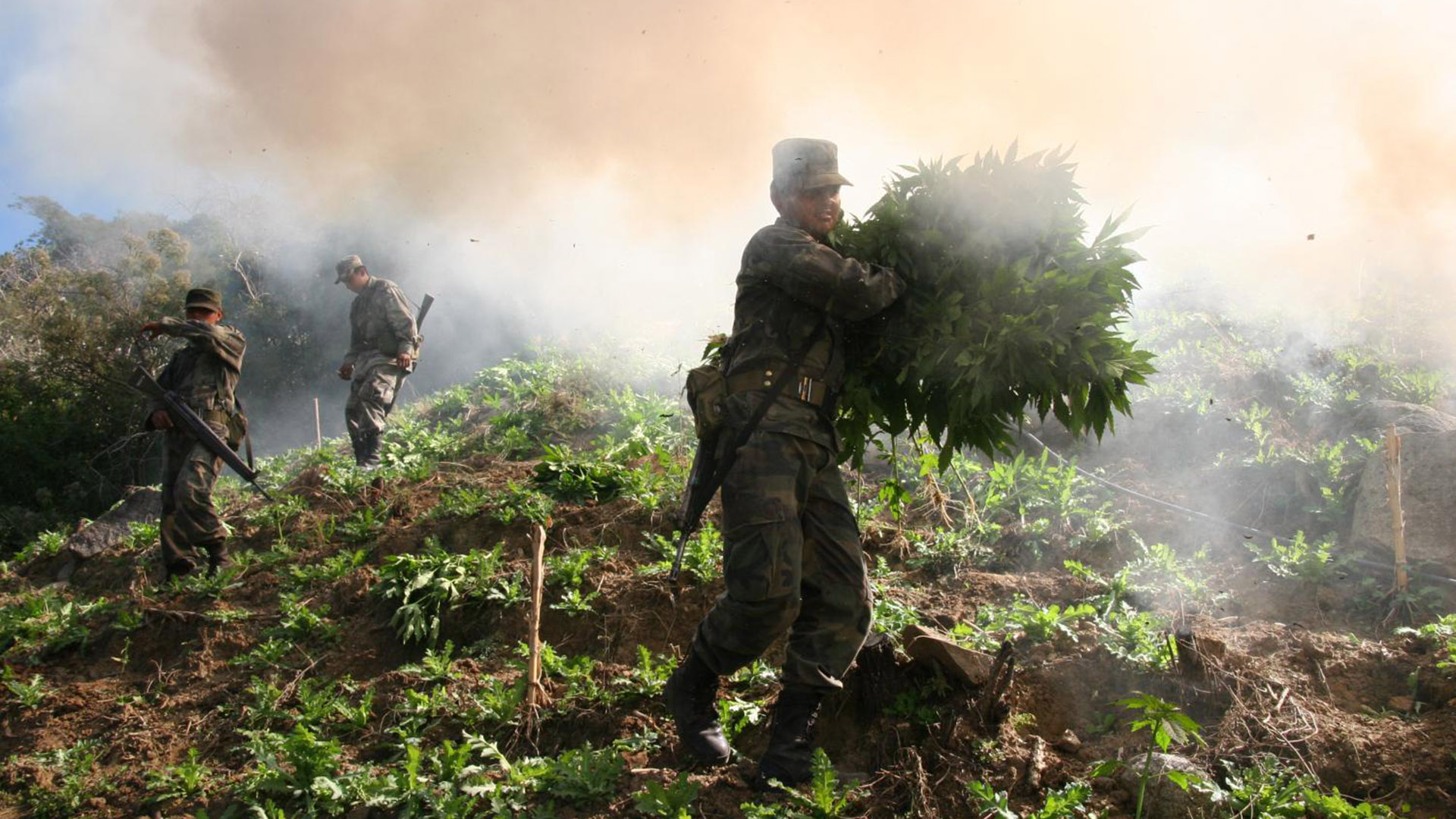 Mexico Mexican soldiers marijuana hero