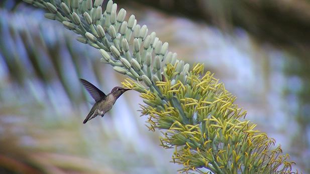 Year of the Hummingbird