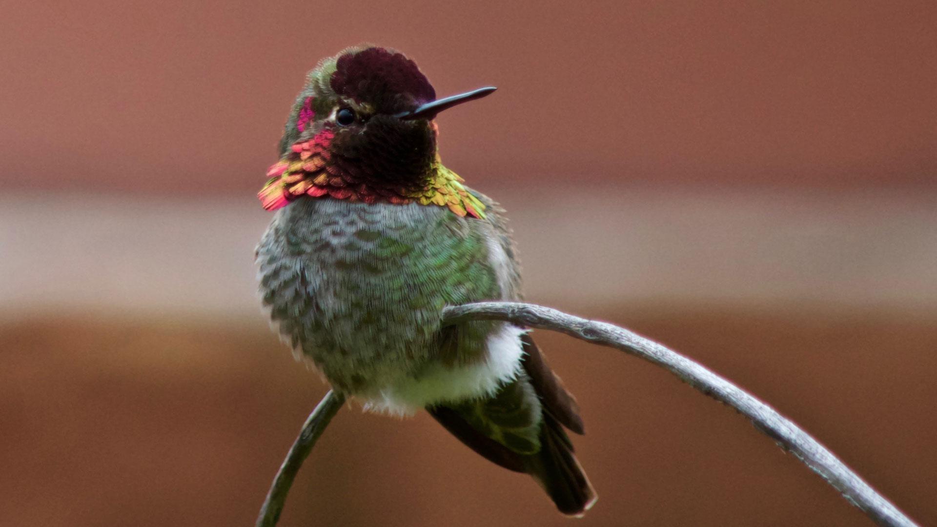 Bright hummingbird