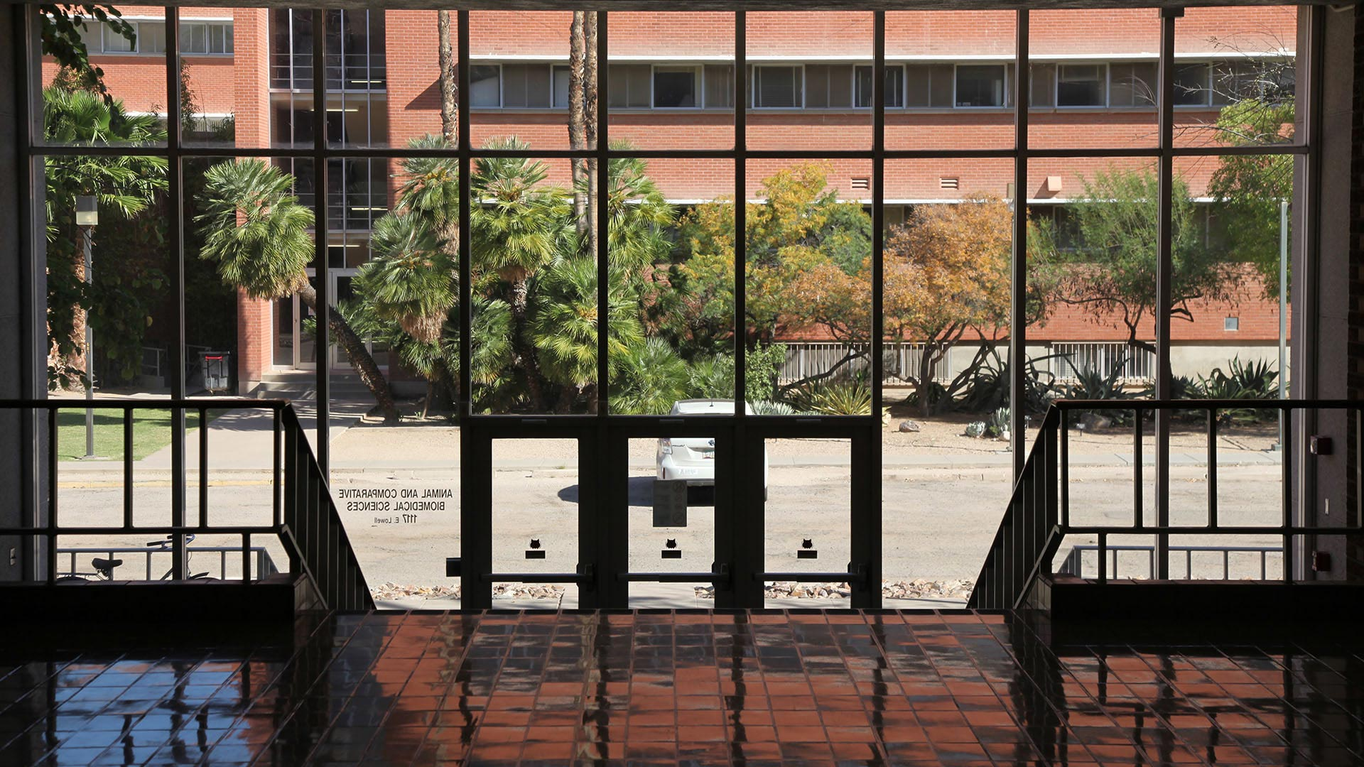 Looking out from the inside of Building 90, or the veterinary science and microbiology building.