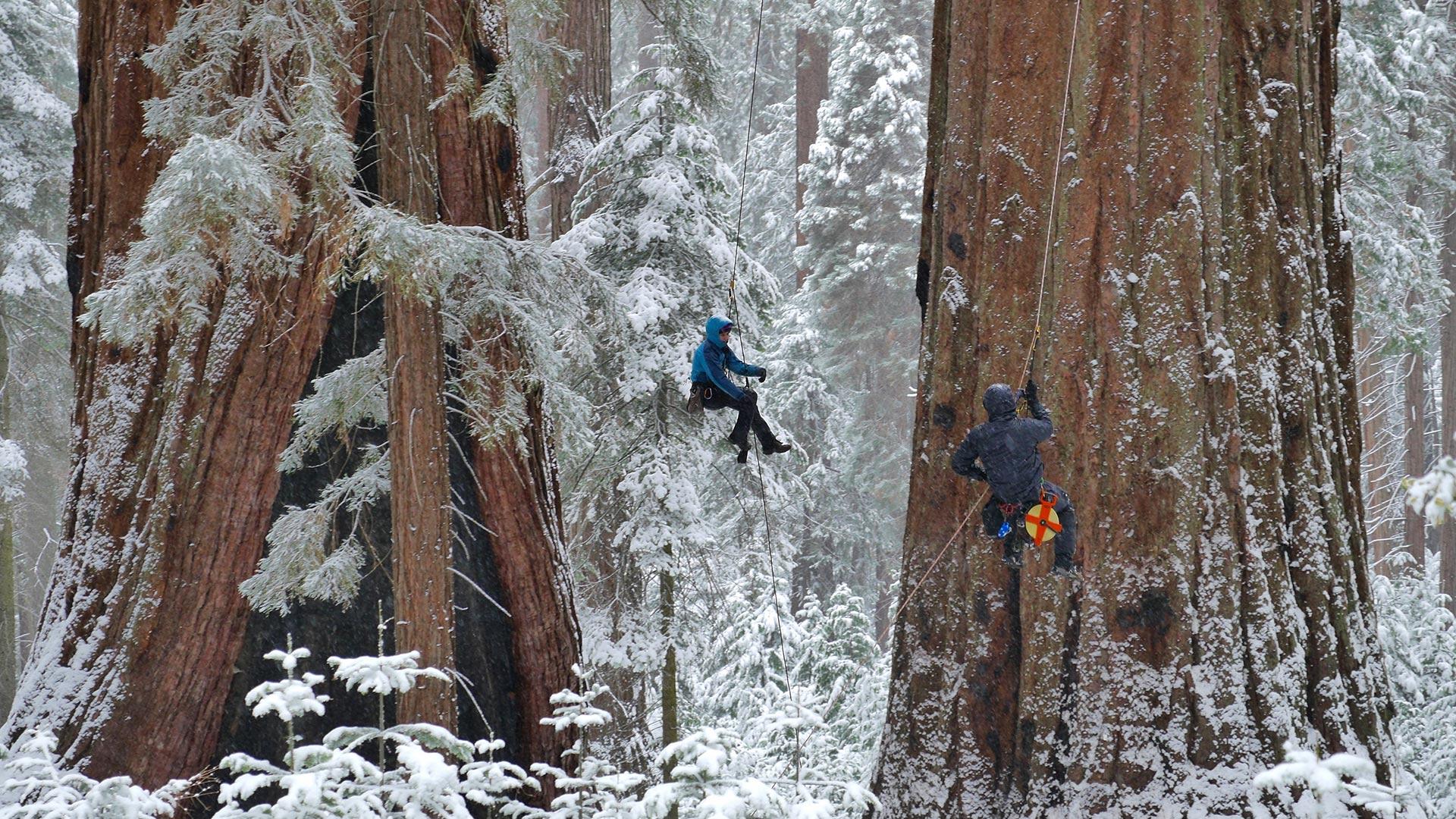 nature_yosemite_sequoia_hero
