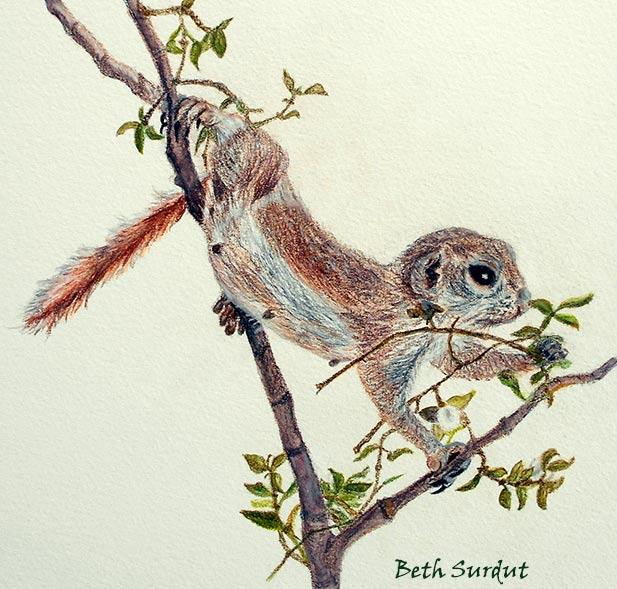 round-tailed ground squirrel spotlight