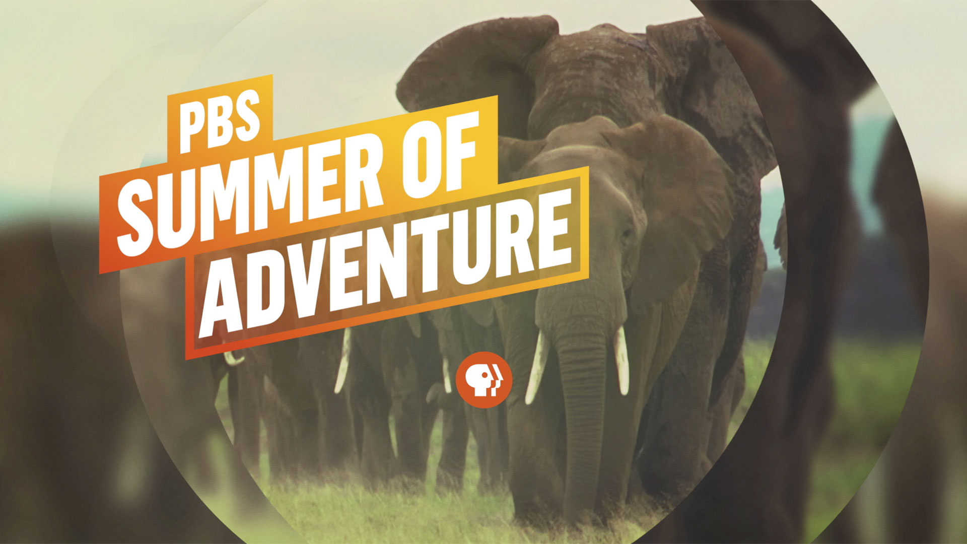 The PBS Summer of Adventure begins June 20, 2017.