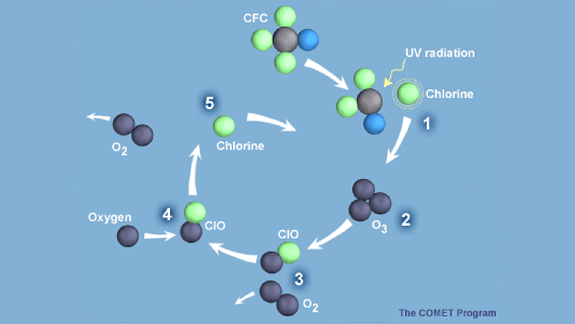 Once in the atmosphere, CFCs drift slowly upward to the stratosphere, where they are broken up by ultraviolet radiation, releasing the chlorine that catalytically destroys ozone. The destructive cycle of a chlorine atom is shown in the graphic.