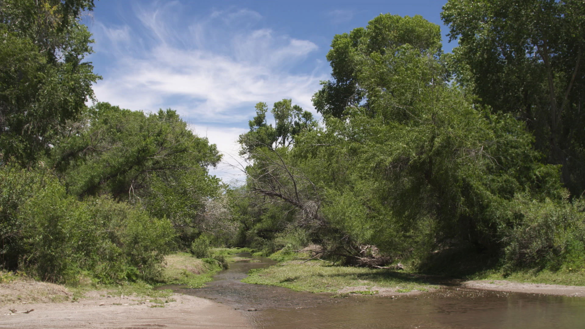 Gila topminnow river