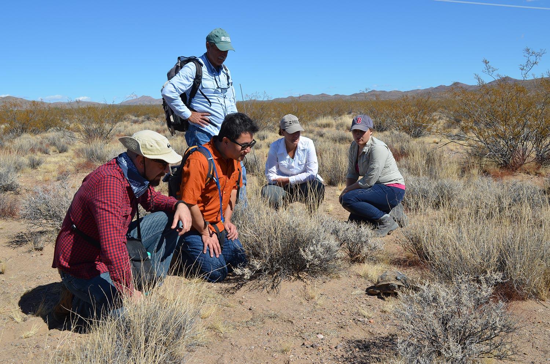 Researchers study mojave desert tortoise