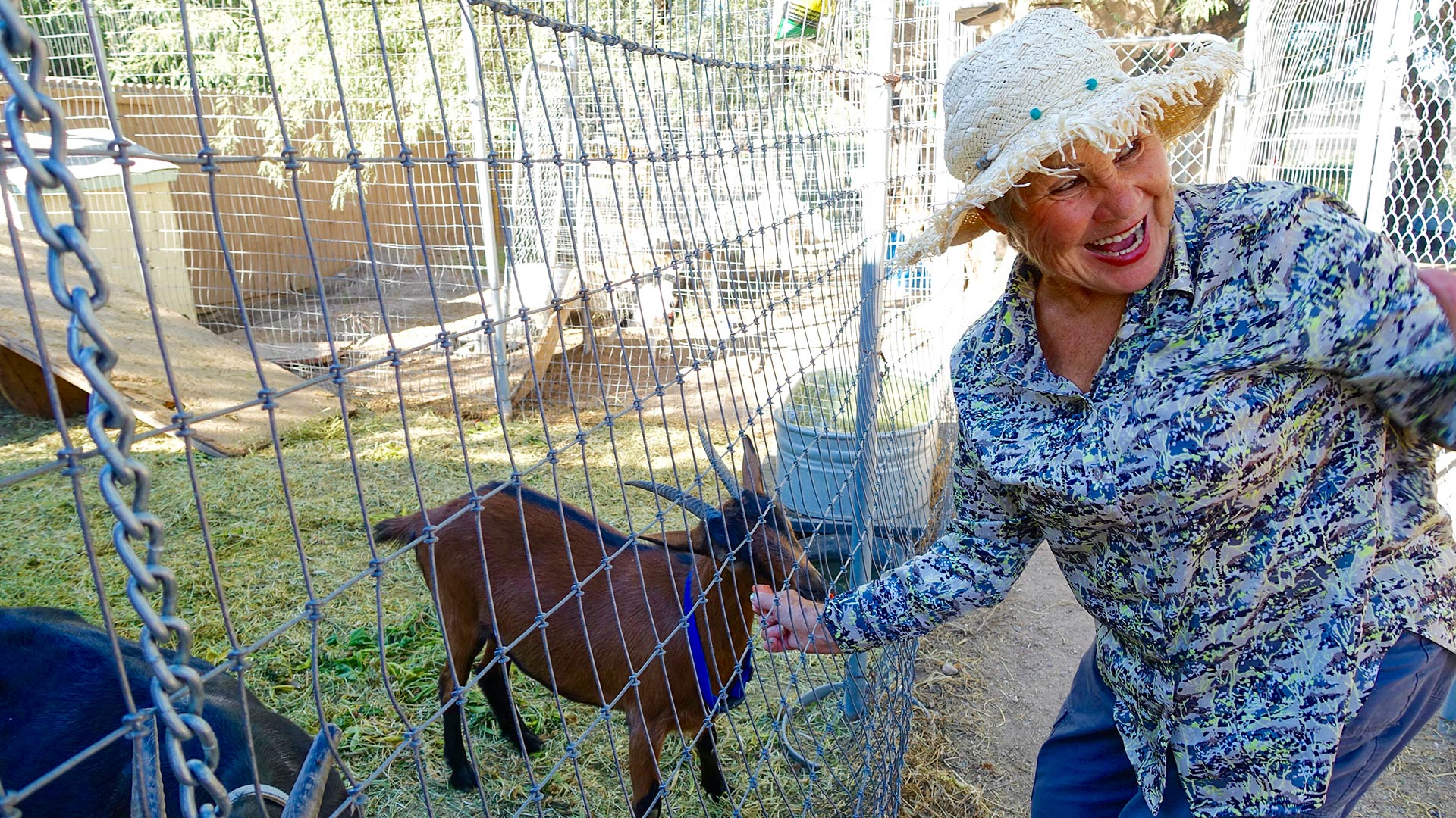 Angelina, a volunteer, coos to the goats in Russian.