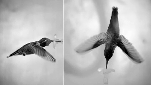Observing hummingbirds using high-speed cameras.