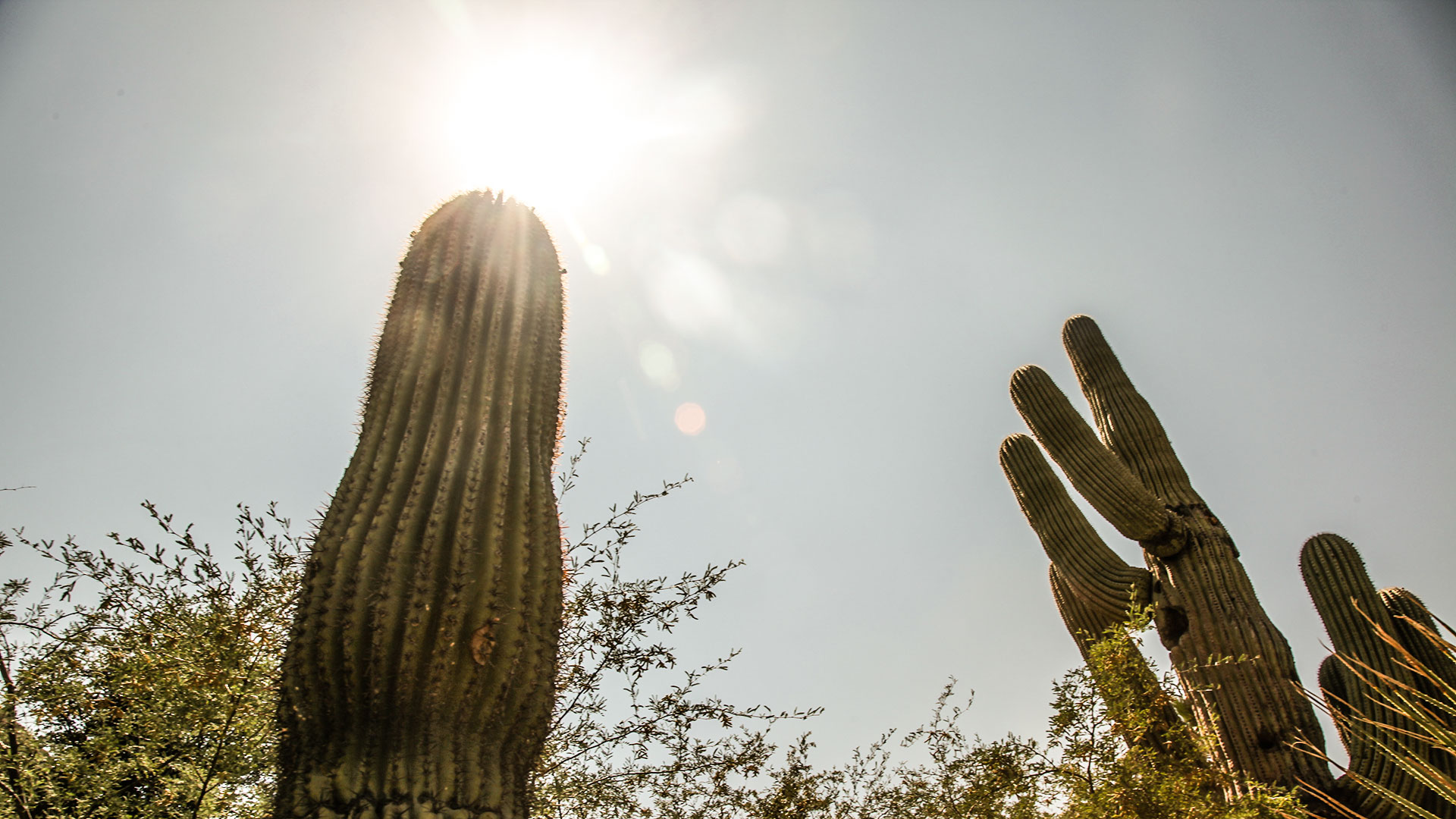 Hot heat sun temperature cactus saguaro