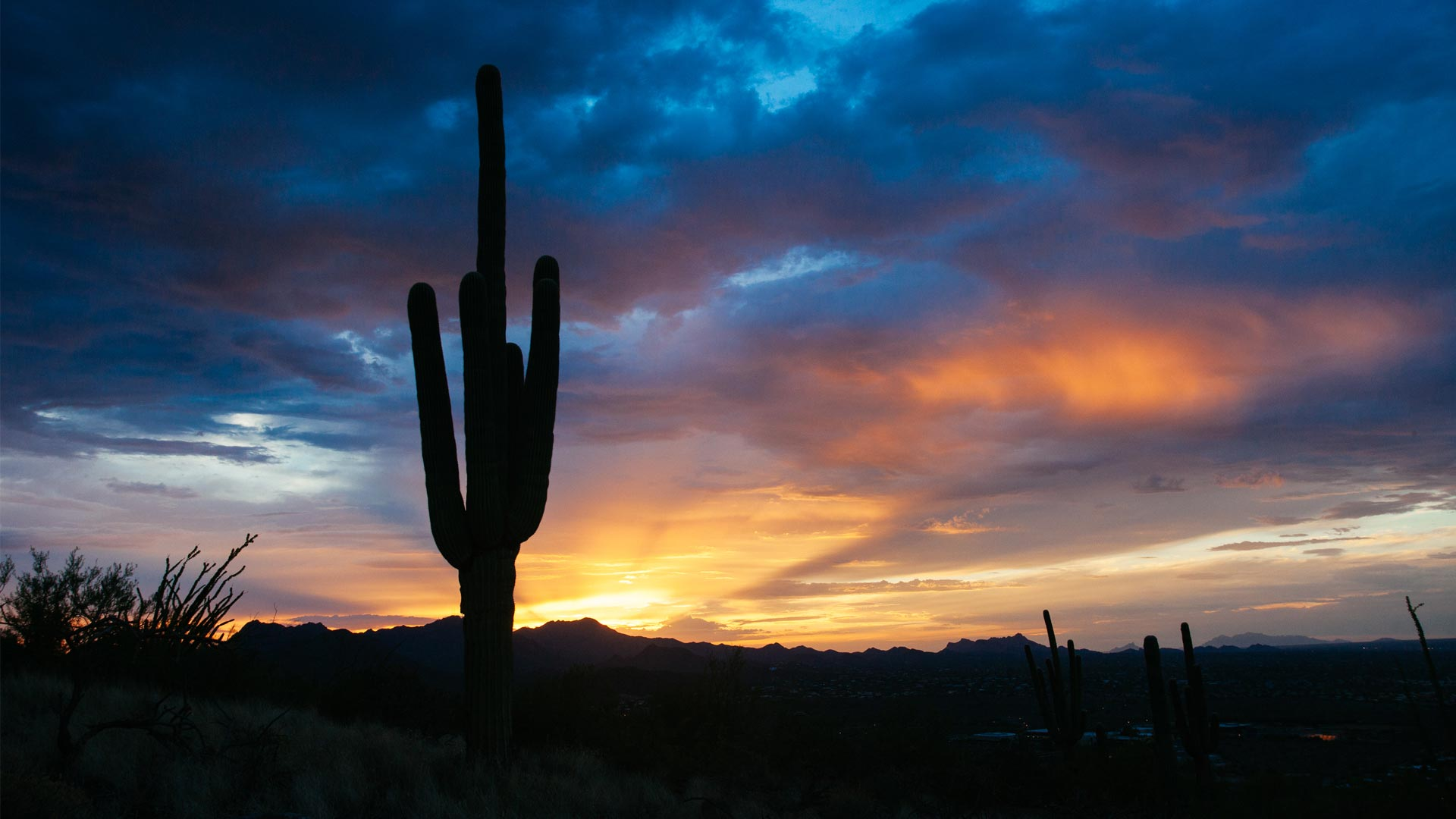 A lone saguaro silhouetted against the sunset on Tumamoc Hill.
