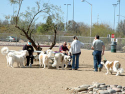 Udall Park Dogs