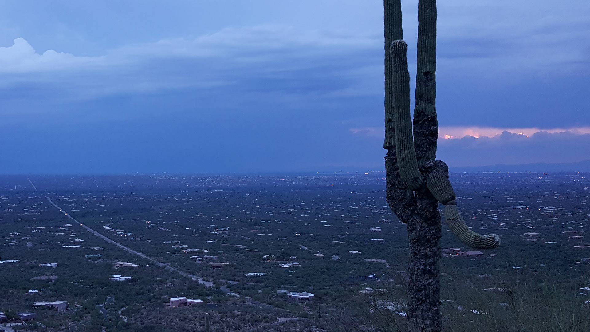 A saguaro cactus in front of a dark monsoon sky.