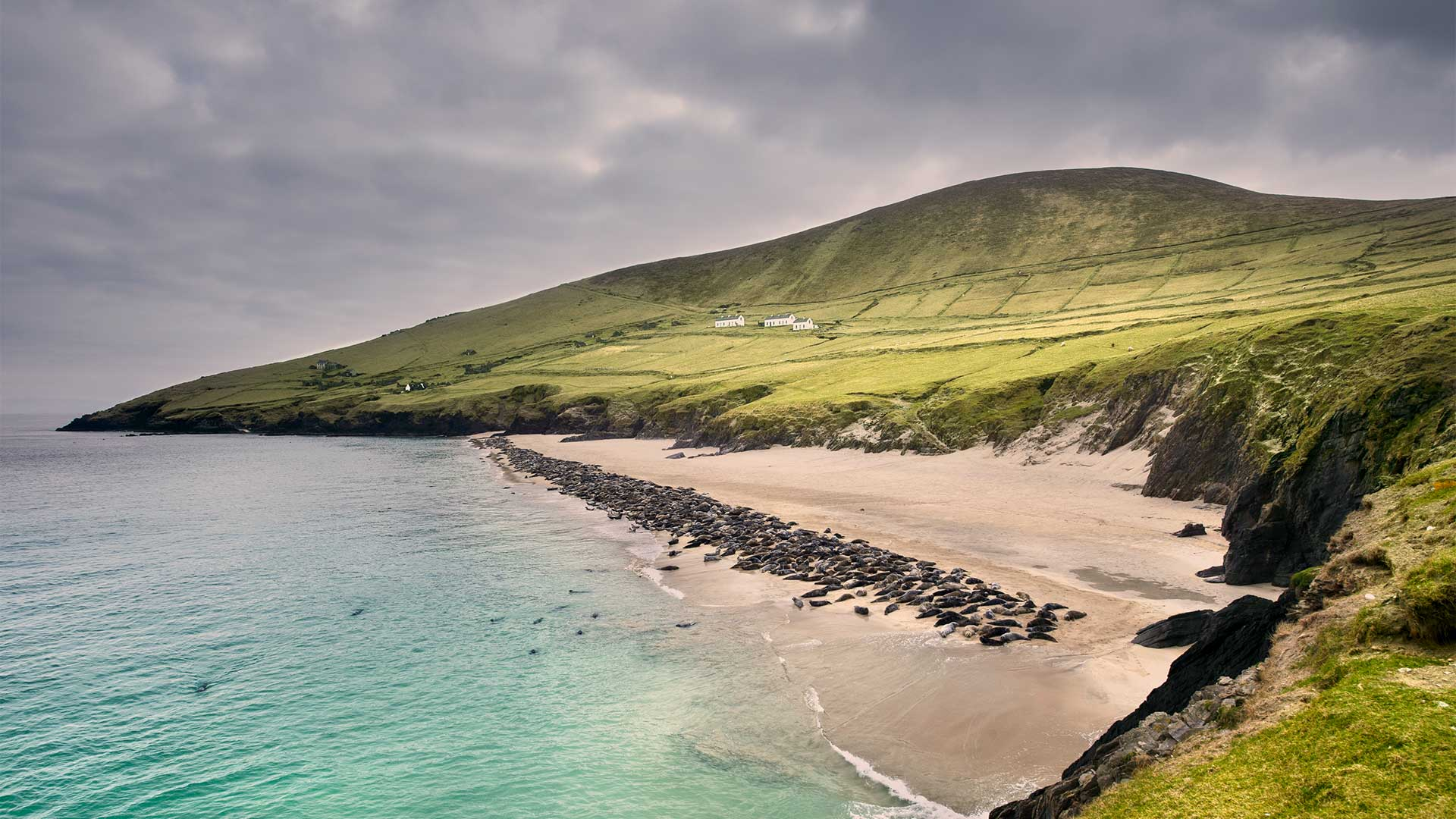 Seal Colony on Blasket Island