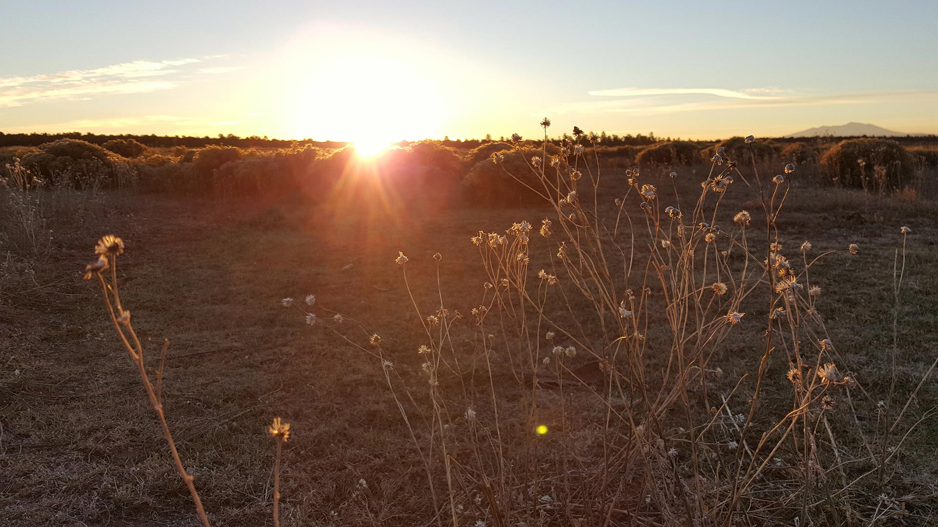 The sun rises over a field in Northern Arizona.