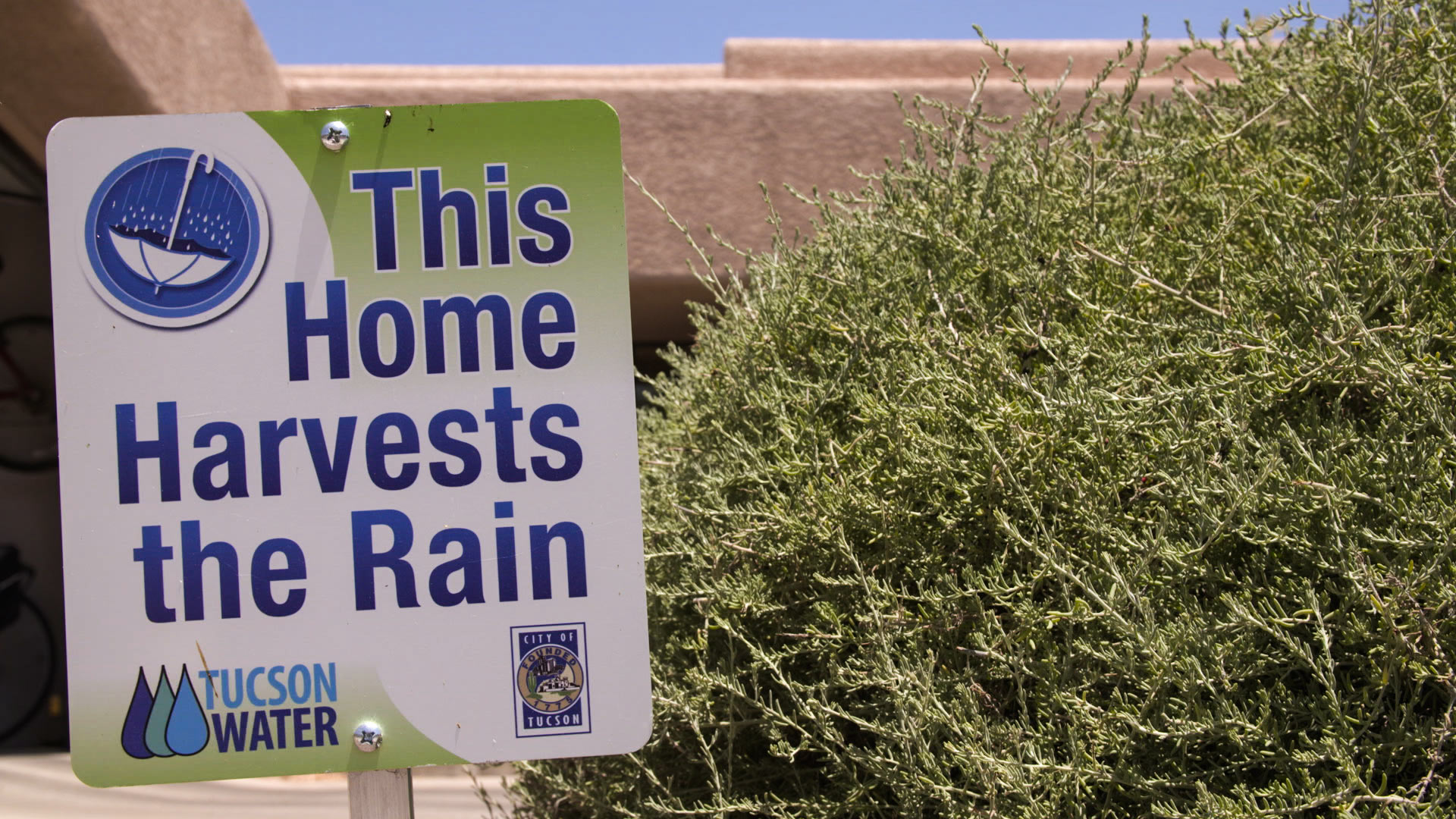 Many Southern Arizona residents employ water-saving techniques, like rainwater harvest.