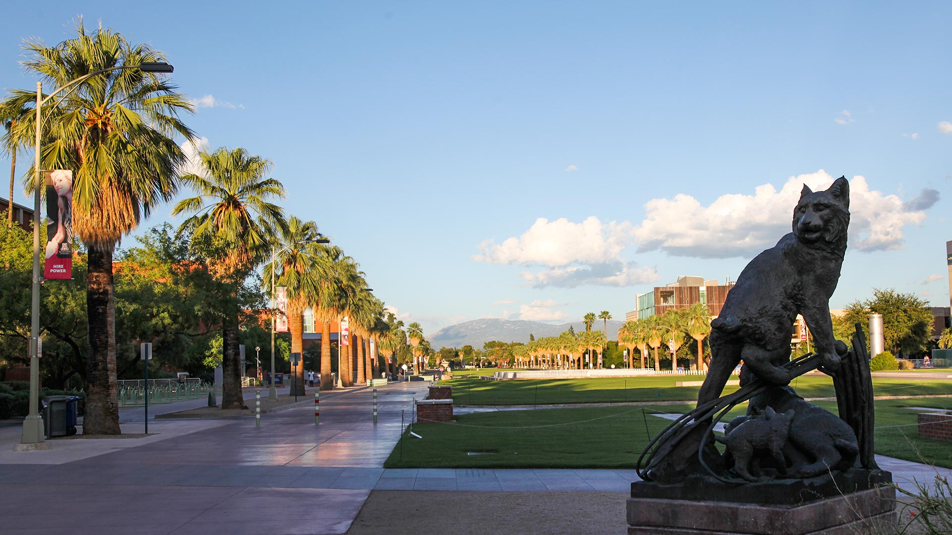 Looking east along the University of Arizona campus mall.
