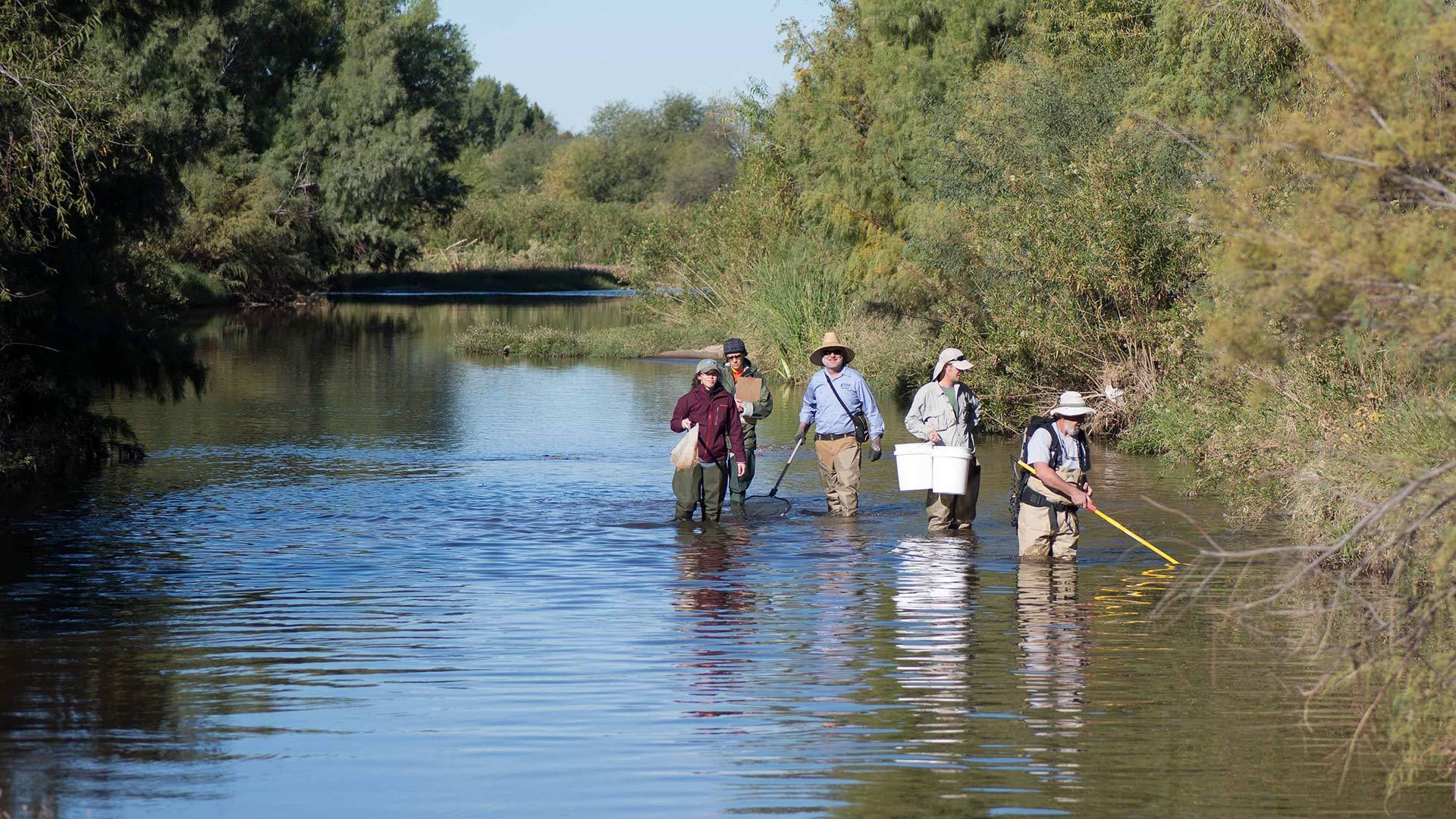 The fish survey team in the Santa Cruz River in Marana, 2015.