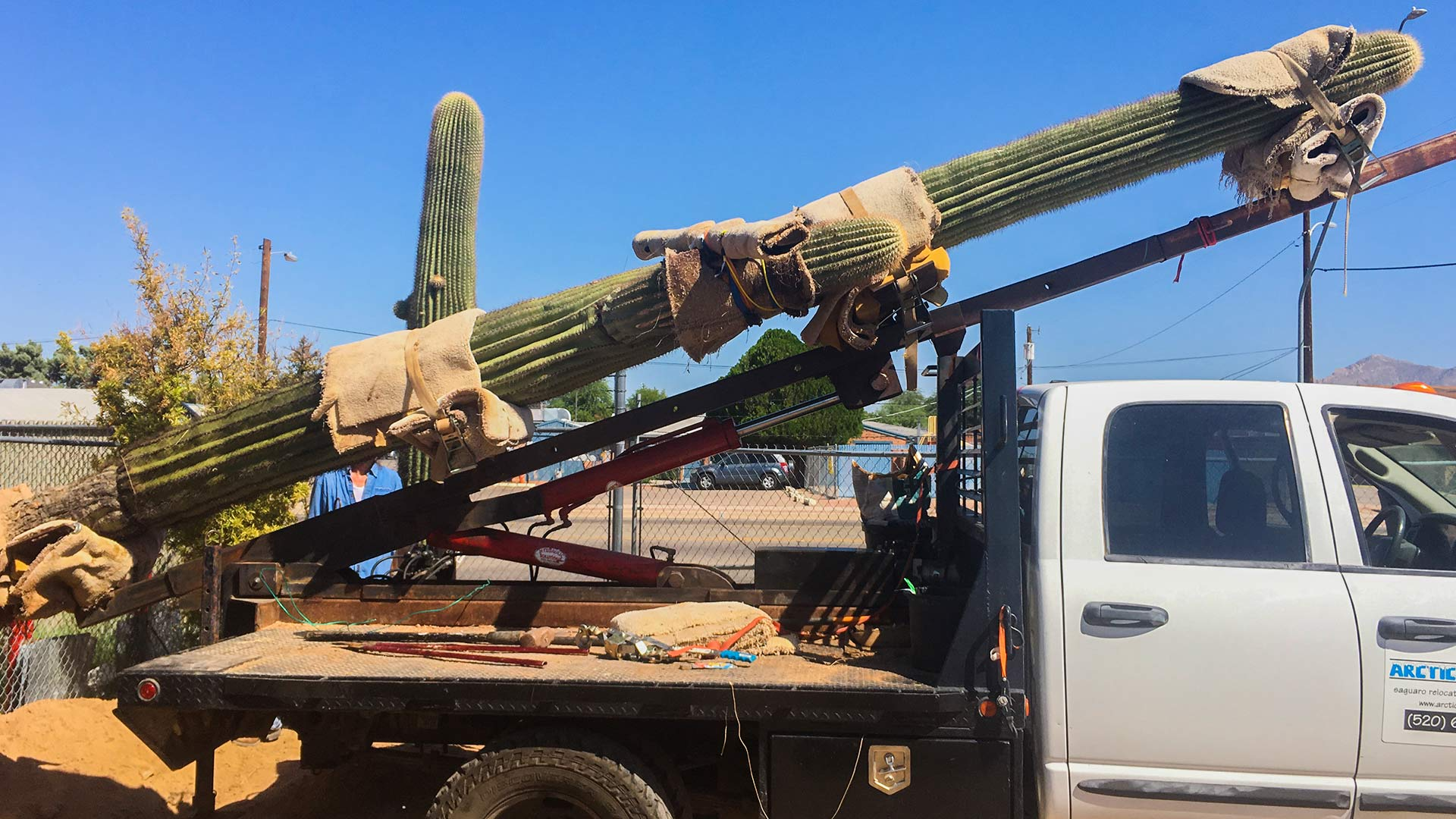 Southern Arizona business officials are sending this Saguaro cactus to Amazon as the beginning of the area's bid to convince the company to locate its second headquarters in the region, Sept. 13, 2017.