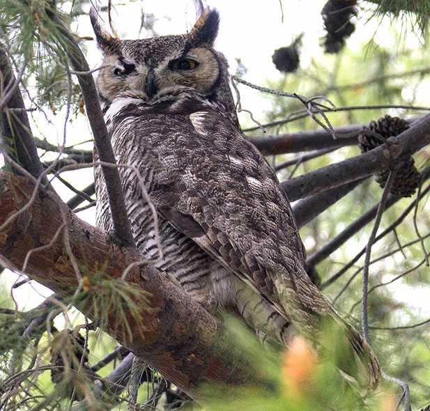 hohum the owl series 1