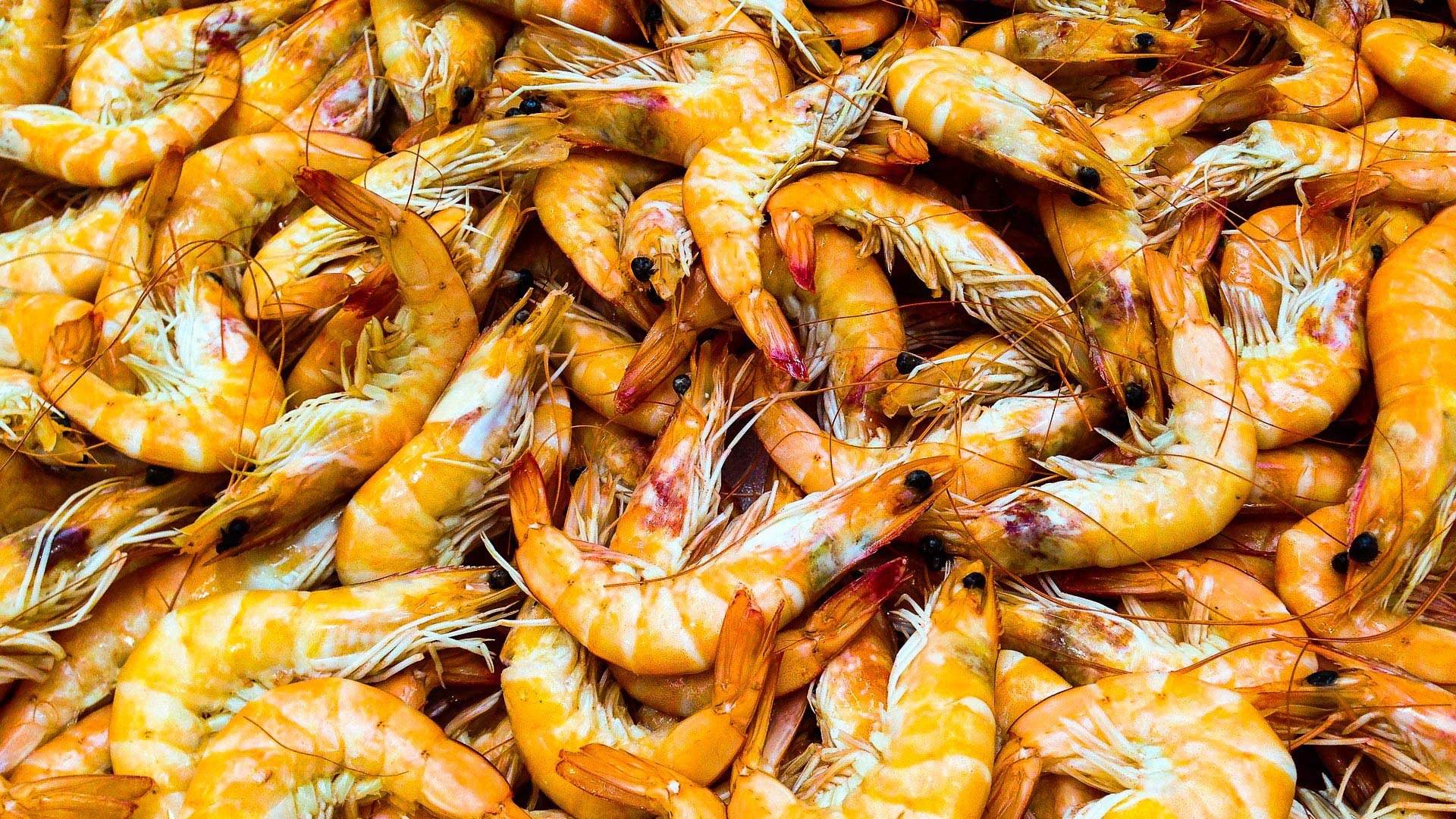 Farmed shrimp is a $40 billion industry.