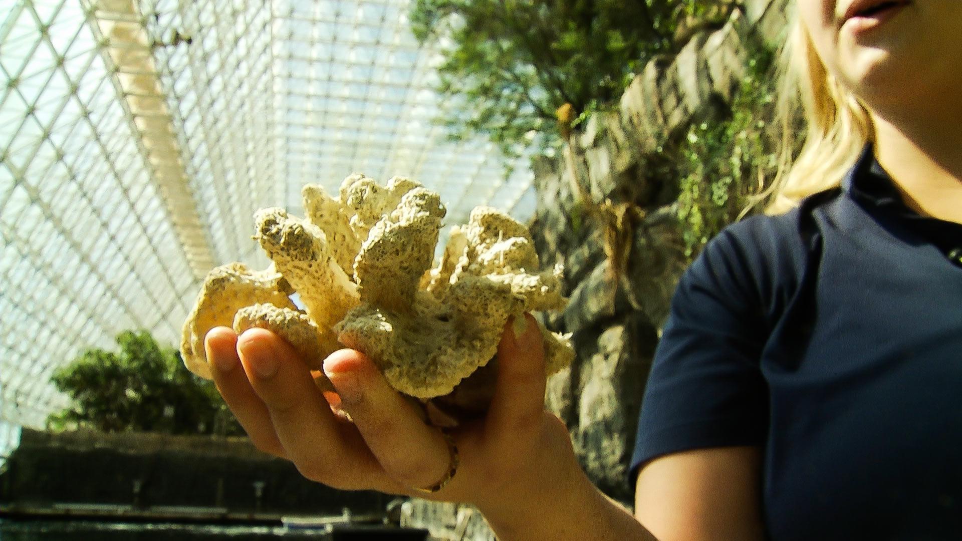 Coral at Biosphere 2.