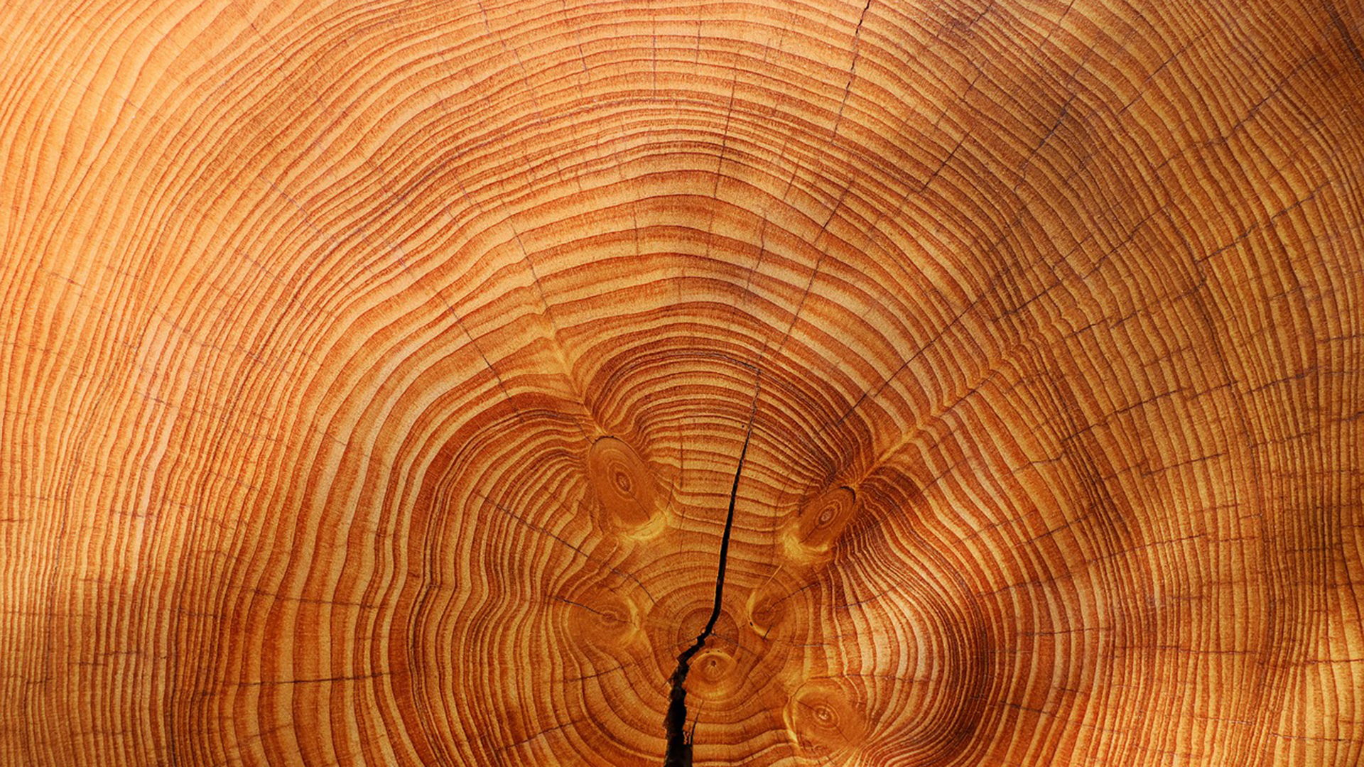 Studying tree rings helped UA researchers track the movement of the tropics over 800 years.