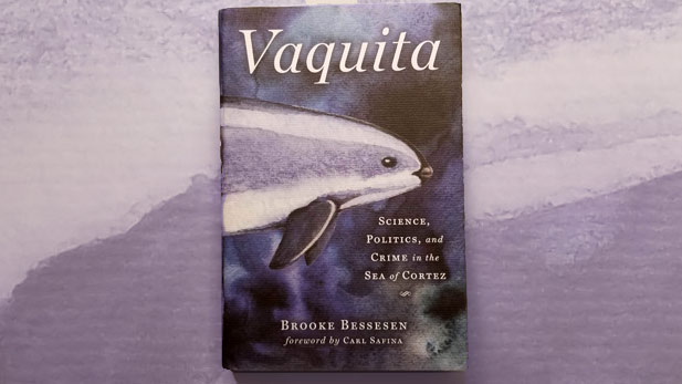 Vaquita by Brooke Bessesen