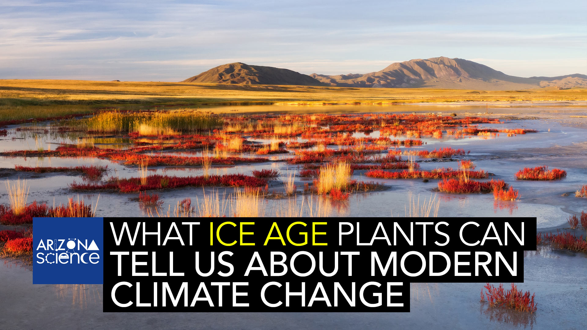 The director of the Southwest Climate Adaptation Center in Tucson, Steven Jackson, believes vegetation from the ice age can tell us about looming dangers of modern climate change.