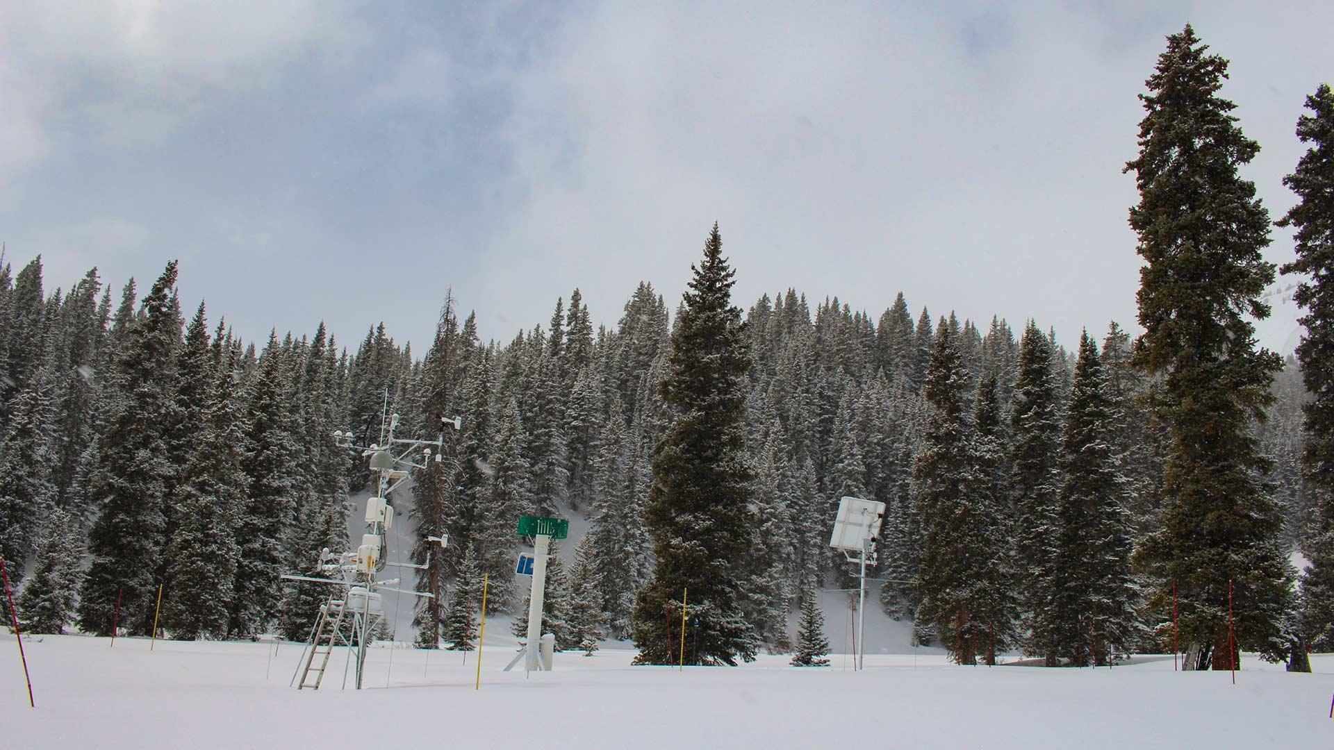 snowpack trees