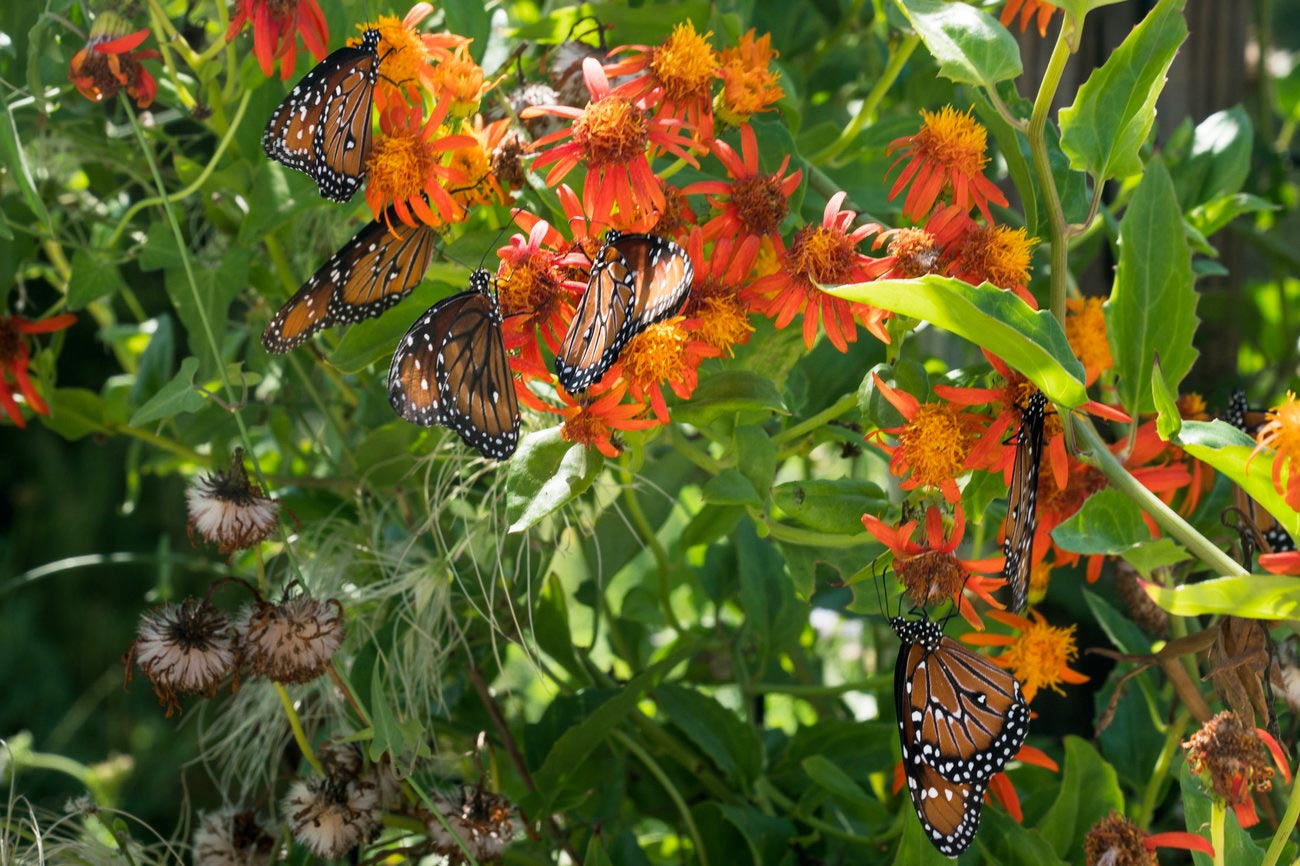 npr_news_story_butterfly_7
