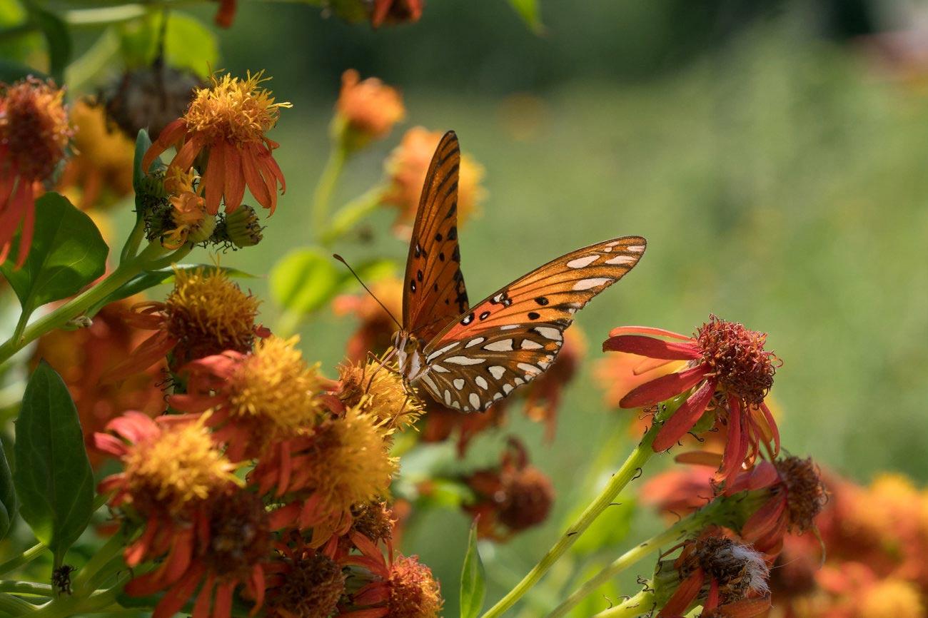 NPR_news_story_butterfly_6