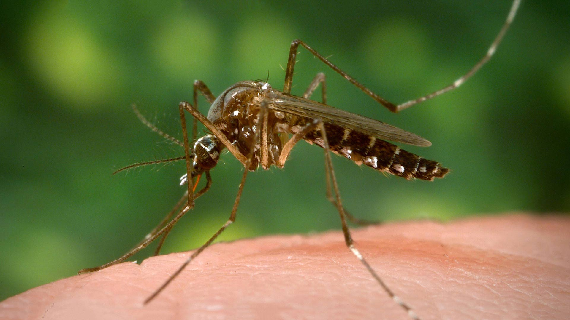 Mosquitoes are historically among the worst carriers of infectious disease globally.