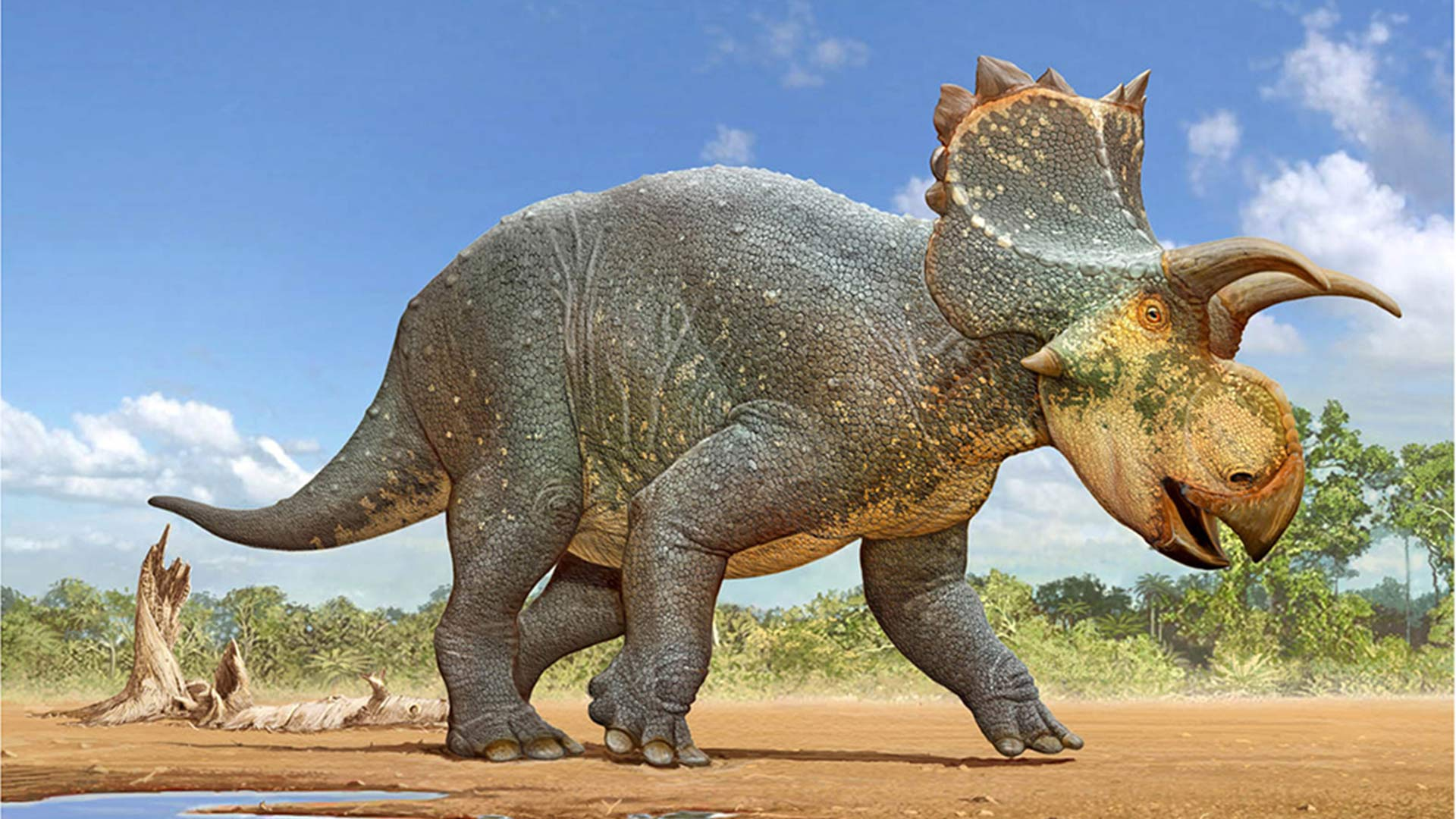 A restoration of Crittendenceratops krzyzanowskii, a new dinosaur species discovered south of Tucson, by Sergey Krasovskiy.