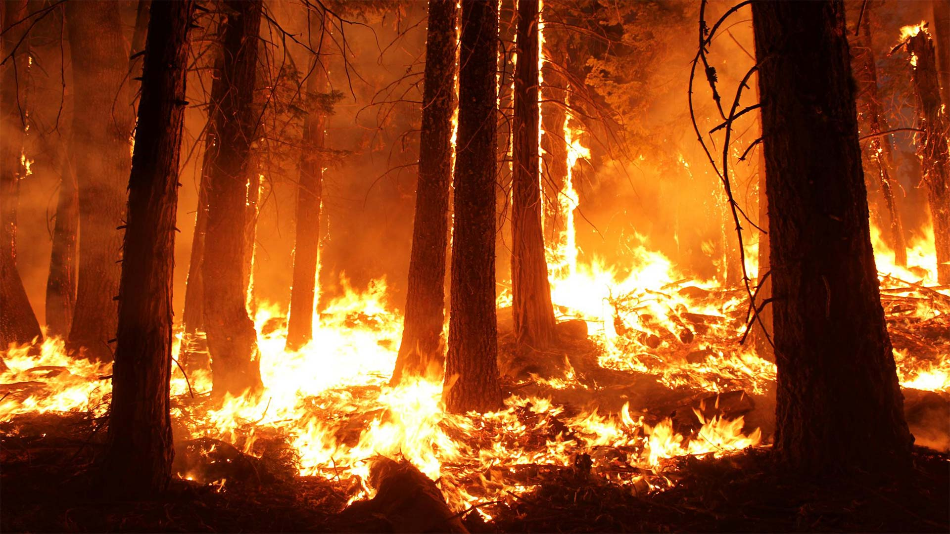 The 2013 Rim Fire in California burned more than 257,000 acres.