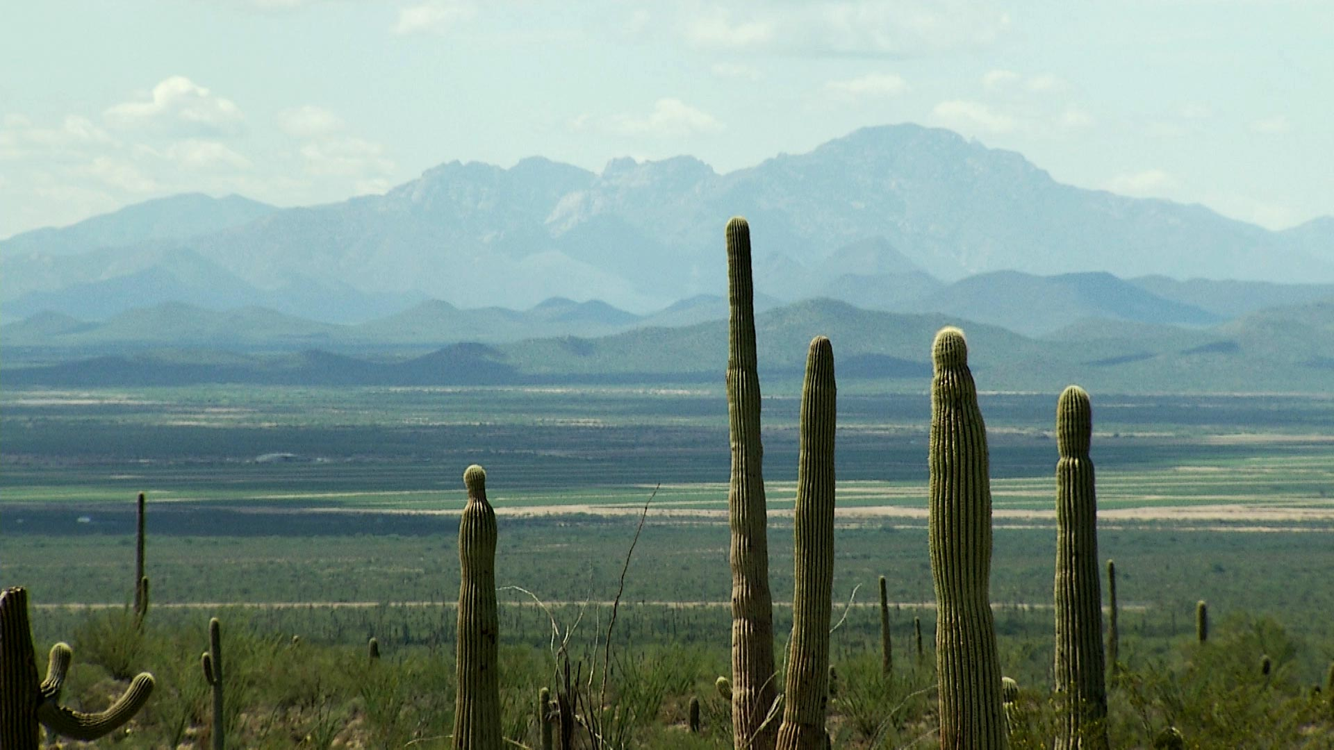 A file image of the Sonoran Desert.