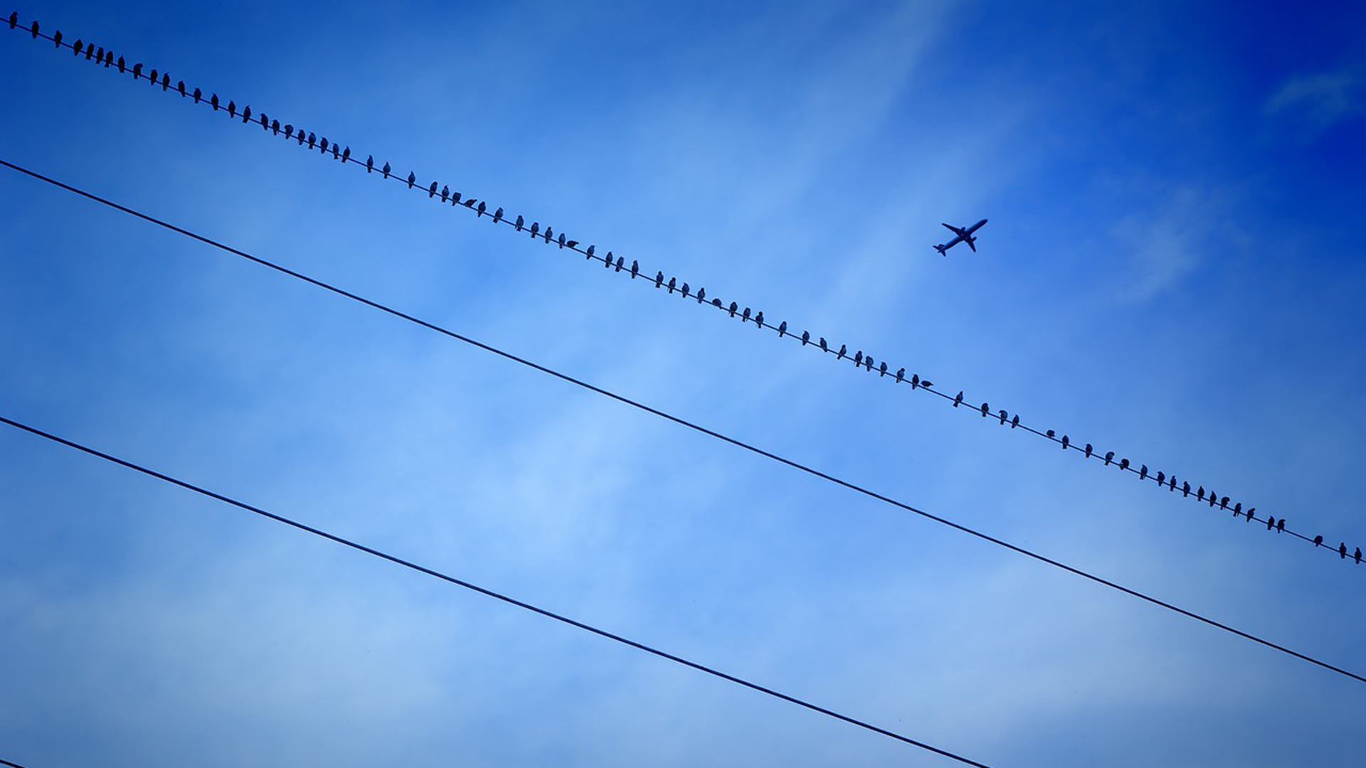 A plane flies overhead as birds perch on a power line.