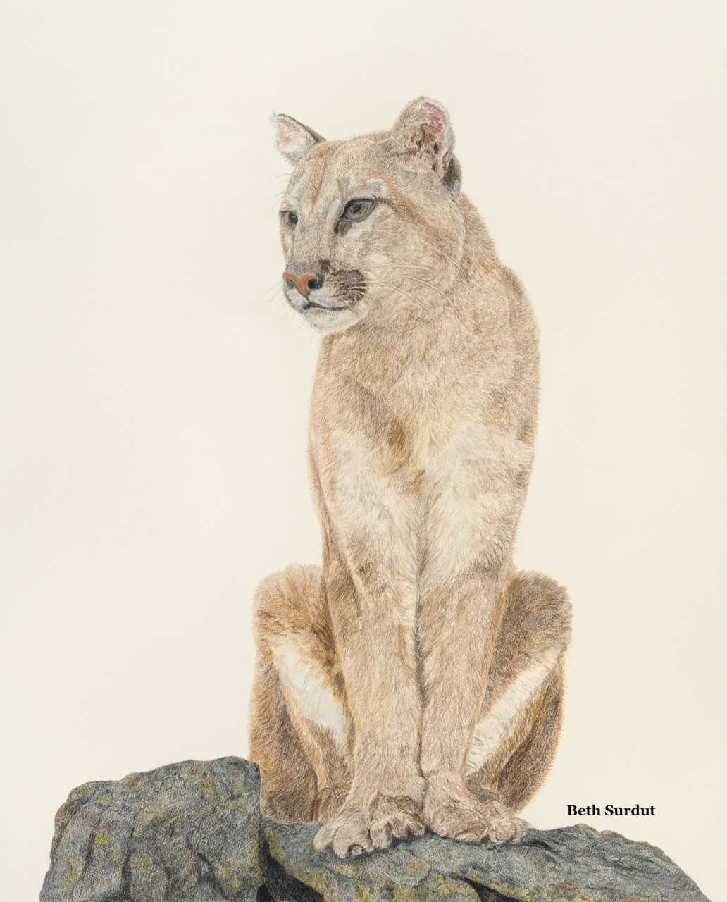 Mountain Lion UNSIZED BODY