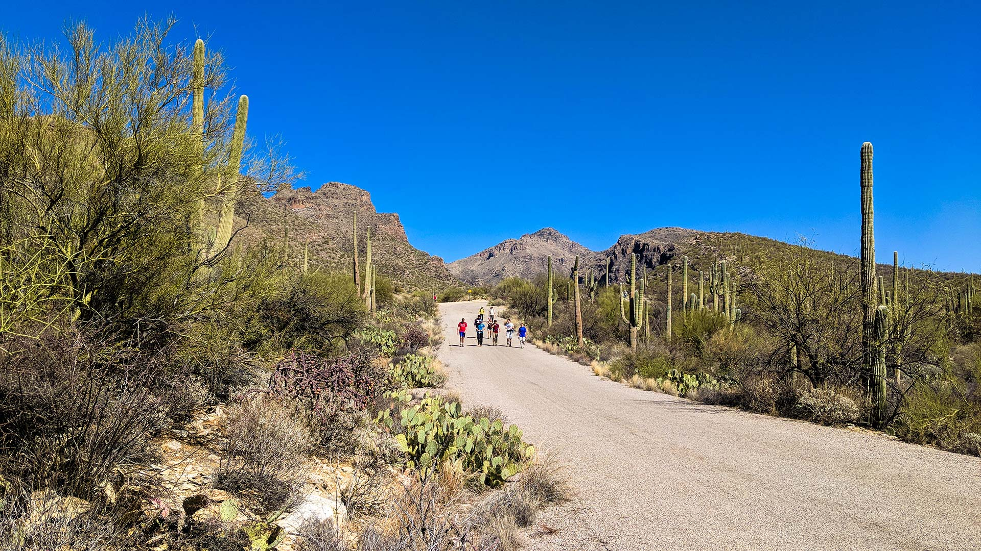 Walking down the road near the Bear Canyon Trail in the Sabino Canyon Recreation Area, February 2018.