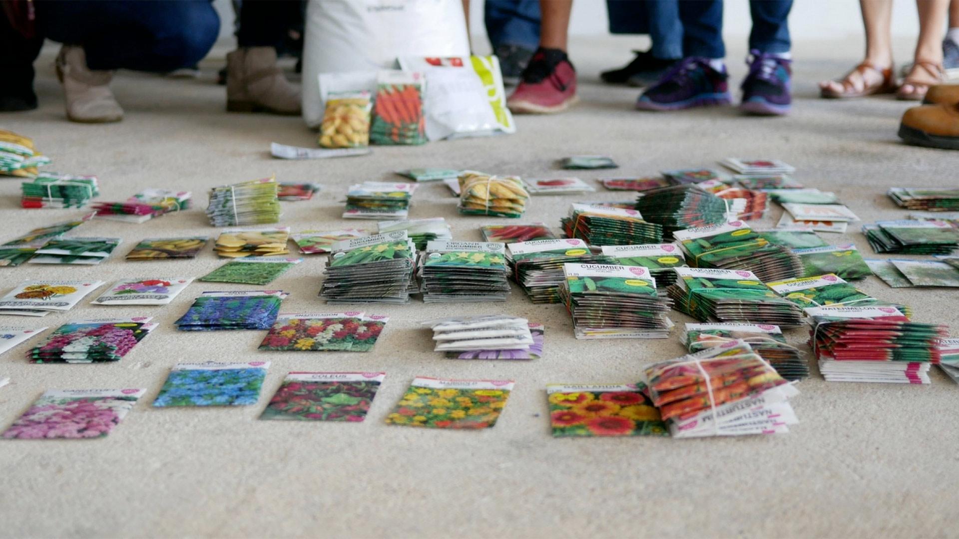 6plus spendid table seeds puerto rio