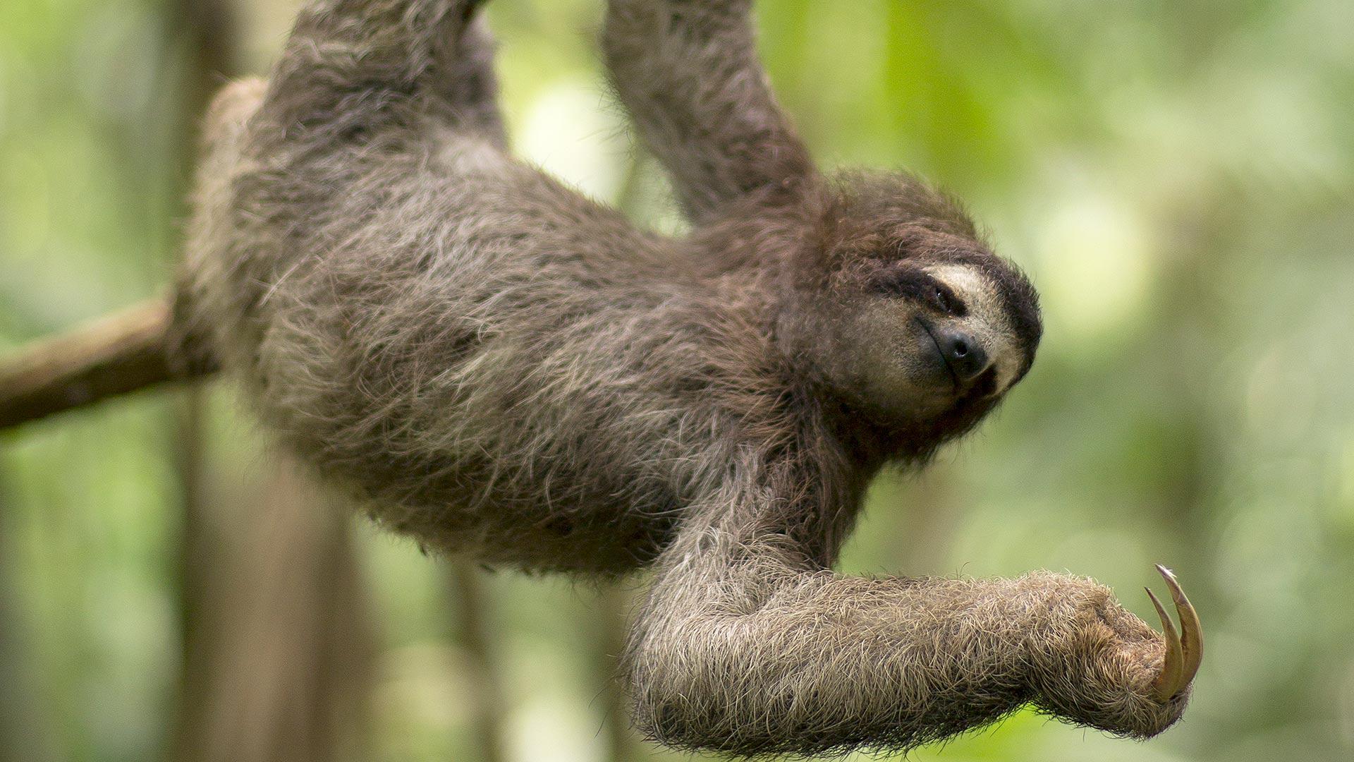 nature_born_rebels_sloth_hero