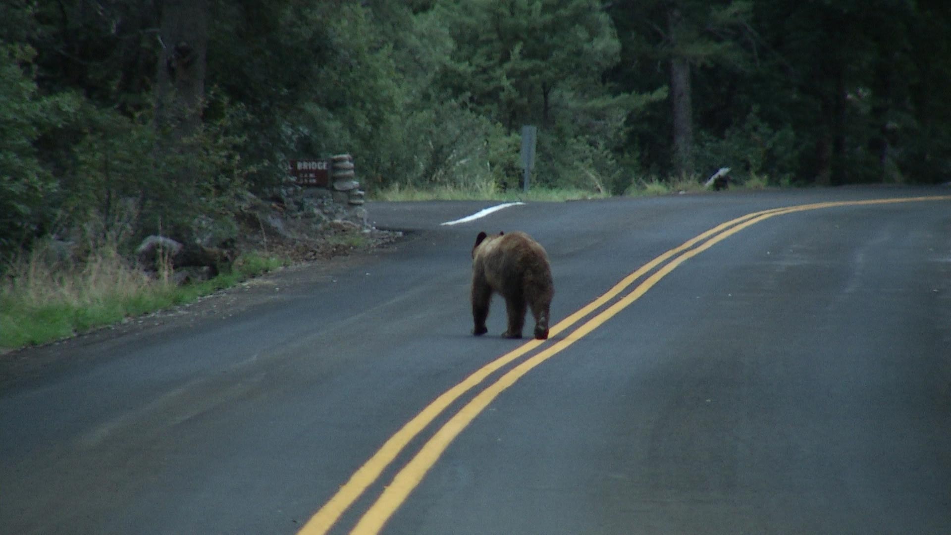 Drought in Southern Arizona affects all wildlife, including bears.