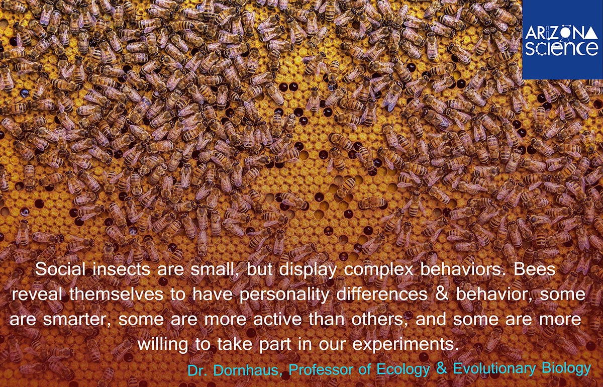 Insights from Insects Quote
