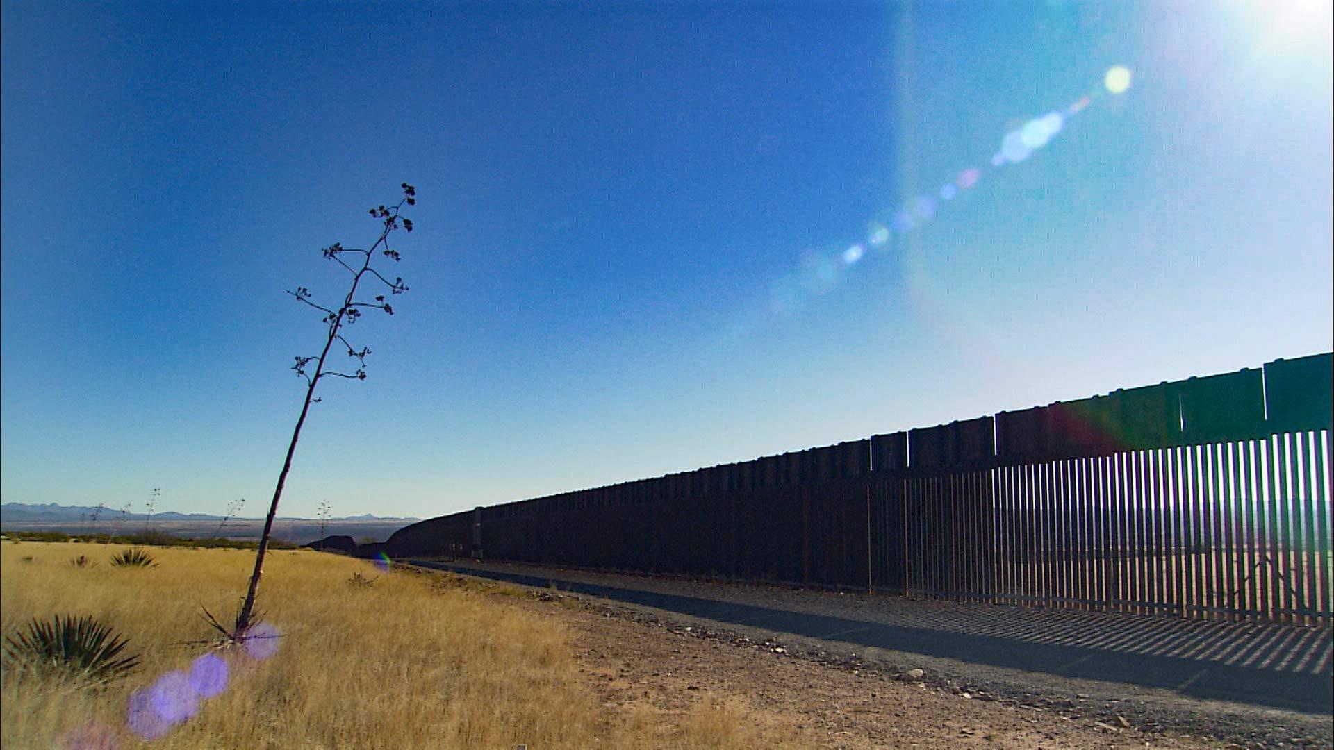 border fence yucca